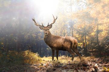 Door stickers Deer Stolzer Hirsch im herbstlichen Wald