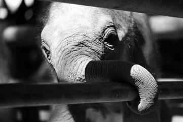 A small elephant glance