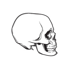 Human Skull hand drawing. Side angle. Black linear drawing isolated on white background. EPS10 vector illustration