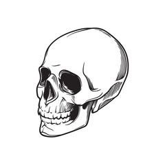 Human Skull hand drawing. In tree quarters angle. Black linear drawing isolated on white background. EPS10 vector illustration