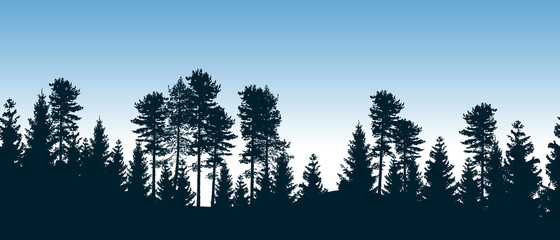 Beautiful seamless vector forest with coniferous trees.