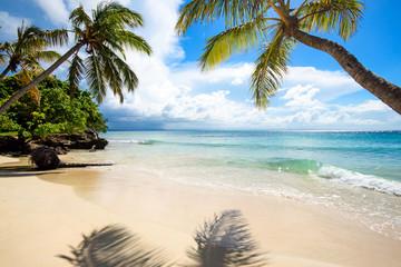Cayo Levantado: Antillen, Karibik, Ferien, Tourismus, Sommer, Sonne, Strand, Auszeit, Meer, Glück, Entspannung, Meditation, Palmen, Mangroven: Traumurlaub an einem einsamen, karibischen Strand :)