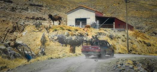 Donkey on hill next to barn in arid farmland