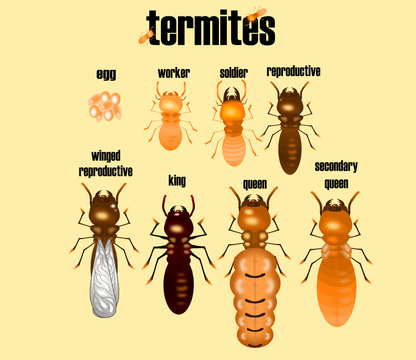 type of termite,white ant collection,cartoon style,vector.