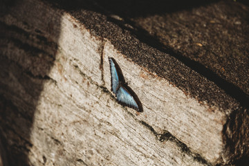 Close up of butterfly sitting on wooden box