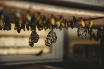 Group of butterflies on wood