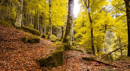 foresta in veste autunnale