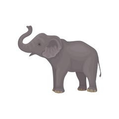 Cute gray elephant standing isolated on white background. Wild animal with large ears, long trunk and tail. Flat vector design