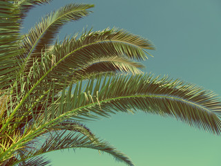 Palm leaves vintage toned photo. Tropical background, print
