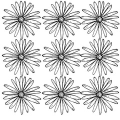 Pattern of daisies manually drawn ink. White and black illustration. Floral surface design.