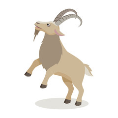 Cartoon mountain goat in different poses in flat style. Cute realistic goat with long horns for decor, learning children. Vector illustration.