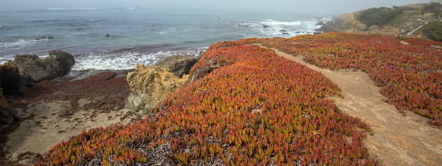 Bluff hiking trail on Rugged Central California coastline at Cambria California United States