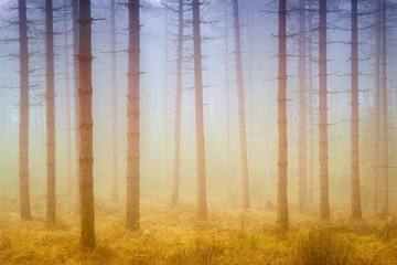 foggy dreamy forest with sunshine at morning in autumn