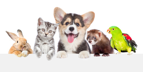 Group of pets together over white banner. isolated on white background Wall mural