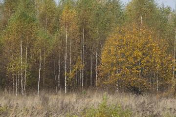 Natural landscape - Pushkin fall