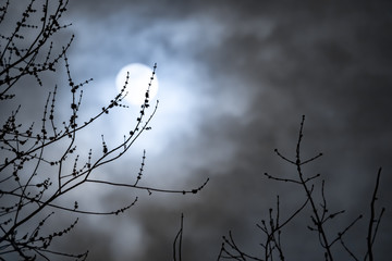 Full moon with white clouds with bare tree branches. Concepts of lunar cycle, midnight, night Fotoväggar