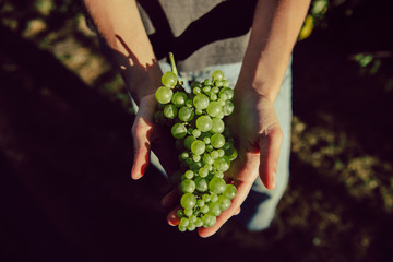 Crop person holding bunch of green grape
