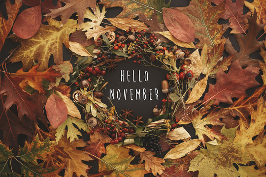 Hello November text on autumn wreath flat lay. Fall leaves circle with berries, nuts, acorns, flowers, herbs on black background. Autumn composition. Seasons greetings card.