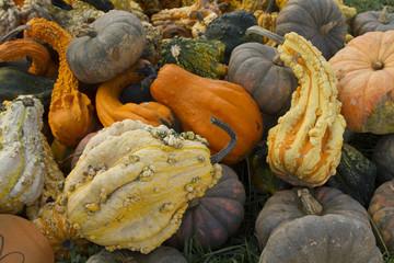 Fall pumpkins squash and gourds