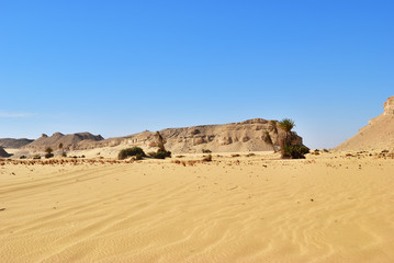 Fototapete - Landscape of the Western desert Sahara, Egypt