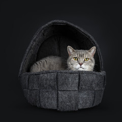 Wise looking senior British Shorthair cat, laying in black woven woolen basket, looking to the camera, isolated on black background