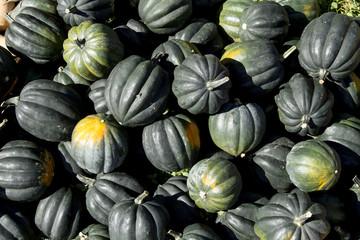 Fresh Organic Acorn Squash