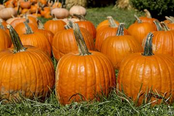 Large Orange Carving Pumpkins
