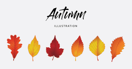 Hello Autumn, black text handwritten calligraphy. Set of autumn leaves. Modern lettering vector illustration on the textured background as poster, postcard, card, invitation template. Concept seasons