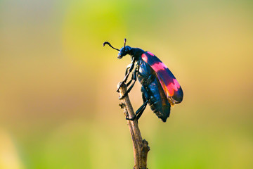 Beetles are a group of insects that form order Coleoptera, in the superorder Endopterygota. Their front pair of wings is hardened into wing-cases, elytra, distinguishing them from most other insects