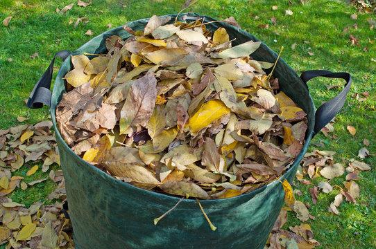 Mit Laub gefüllter Abfallsack im Herbst