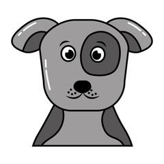 cute pet animal dog isolated image