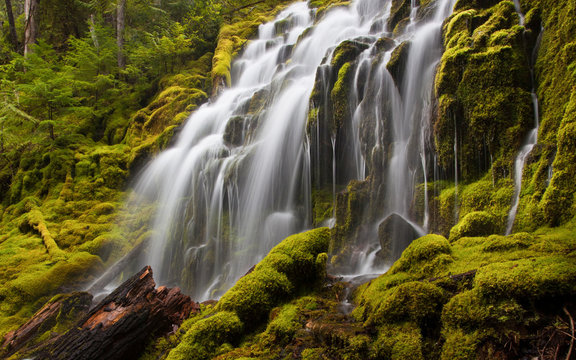 Upper Proxy Falls in Oregon with mossy rocks and logs