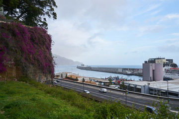 View of Funchal marina with purple flowers on a wall