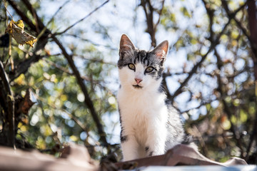 Portrait of a curious and gentle cat on the roof of a house