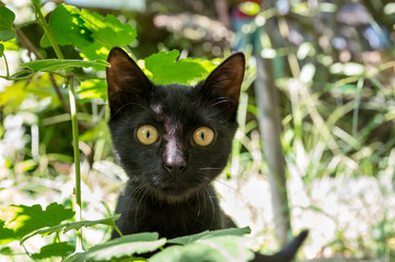 Black kitten outdoors in grass