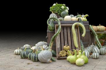 lots of various pumpkins