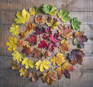 Close-up of colorful leaves arranged on wooden table