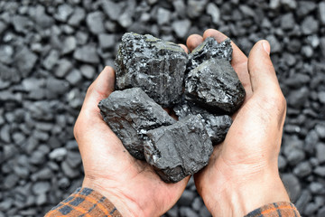 Coal in the hands of worker miner