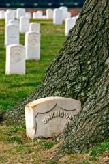 Tree Eats Gravestone