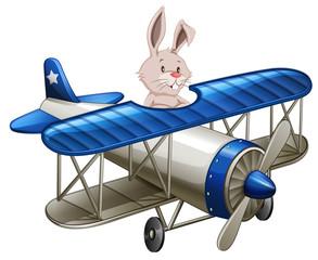 A rabbit riding plane