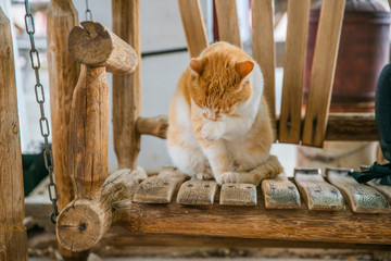 cat sitting on wooden bench