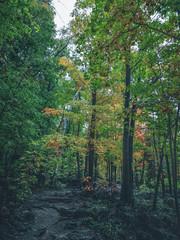 Fall_colors