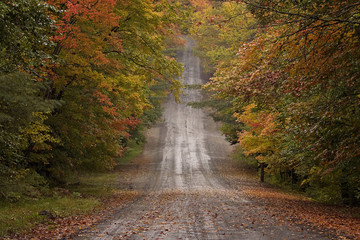 Country road winds through fall color trees in New England