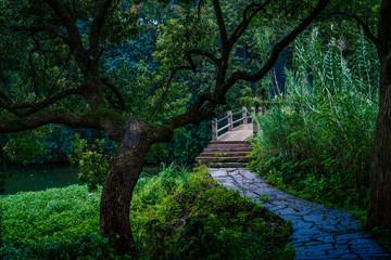 Captured in Hangzhou Xixi Wetland scenery