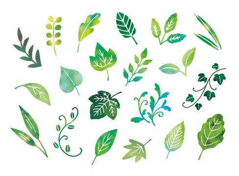 葉手描き水彩