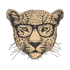 Portrait of Leopard with sunglasses, hand-drawn illustration, vector isolated elements