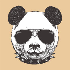 Portrait of Panda with sunglasses and collar, hand-drawn illustration, vector