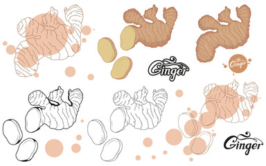 hand drawn ginger root, spicy ingredient, ginger logo, healthy organic food, spice ginger isolated on white background, culinary herbs, label, food, natural healthy food, vector graphic to design