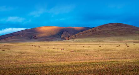 Grassland dusk landscape