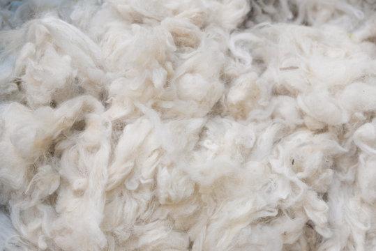 Close up of Australian Merino Wool Warm Craft Fibre/Fabric Industry Concept